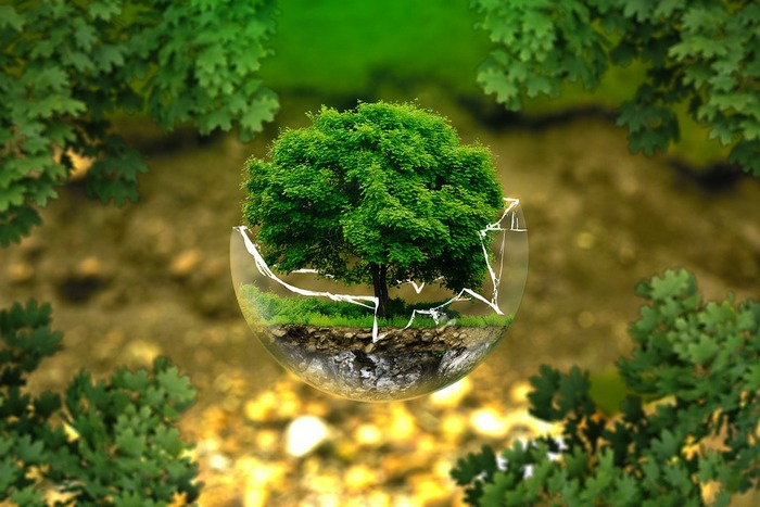 Tree in a fracked glass dome - Benefits of healthy living